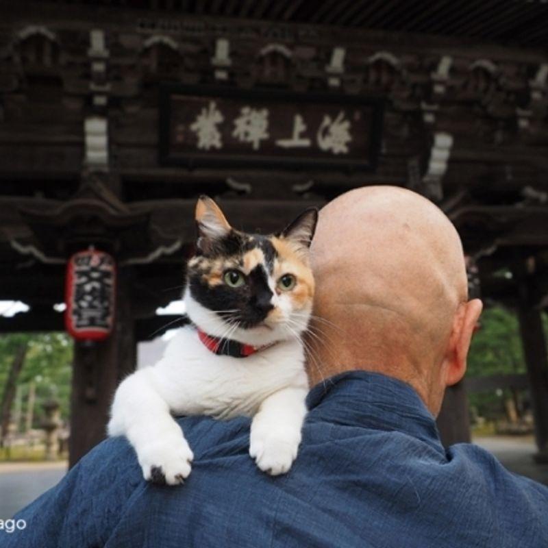 ねこの京都 / Neko no Kyoto: Cats + Kyoto = Japan eye candy from photographer Mitsuaki Iwagō photo