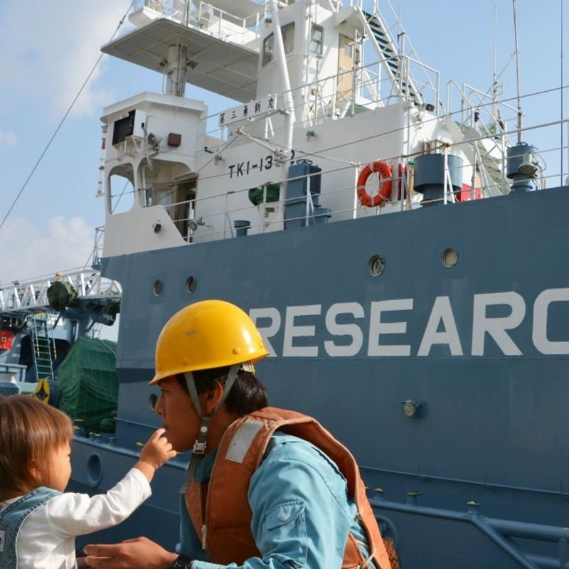 """Japanese vessels leave for Antarctic for """"research whaling"""" photo"""
