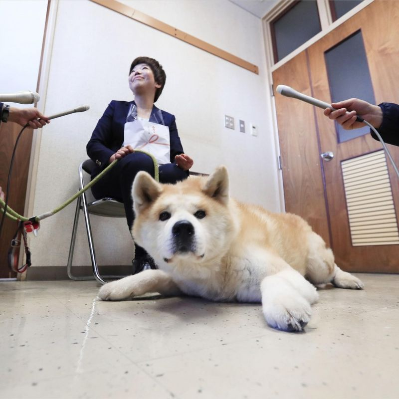 Akita dog, owner honored for rescuing elderly woman in Japan photo