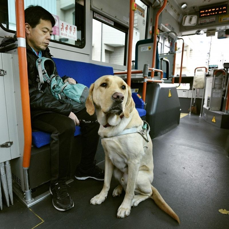 Guide dog owners face discrimination 2 yrs after ban on such practice photo