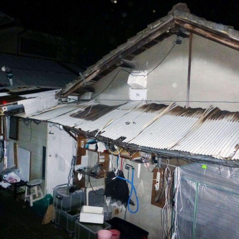 15歳の拘束後、体重19kgの日本人女性が死亡した:警察 photo
