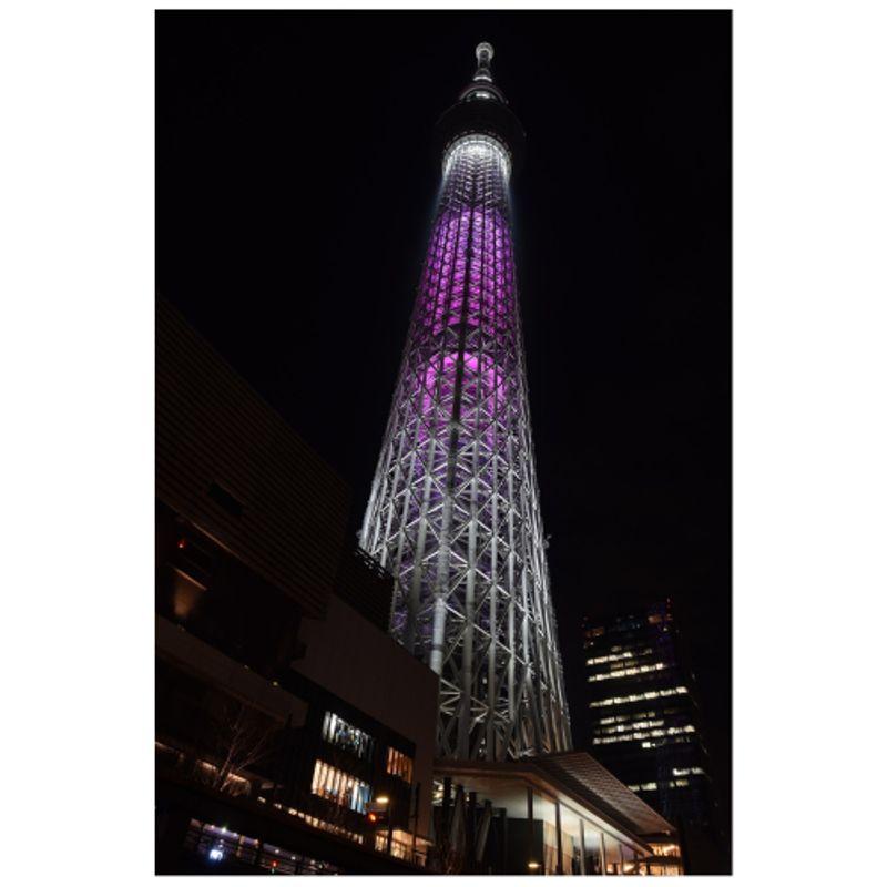 Cherry blossom meets art in Tokyo: Immersive sakura experiences in 2019 photo
