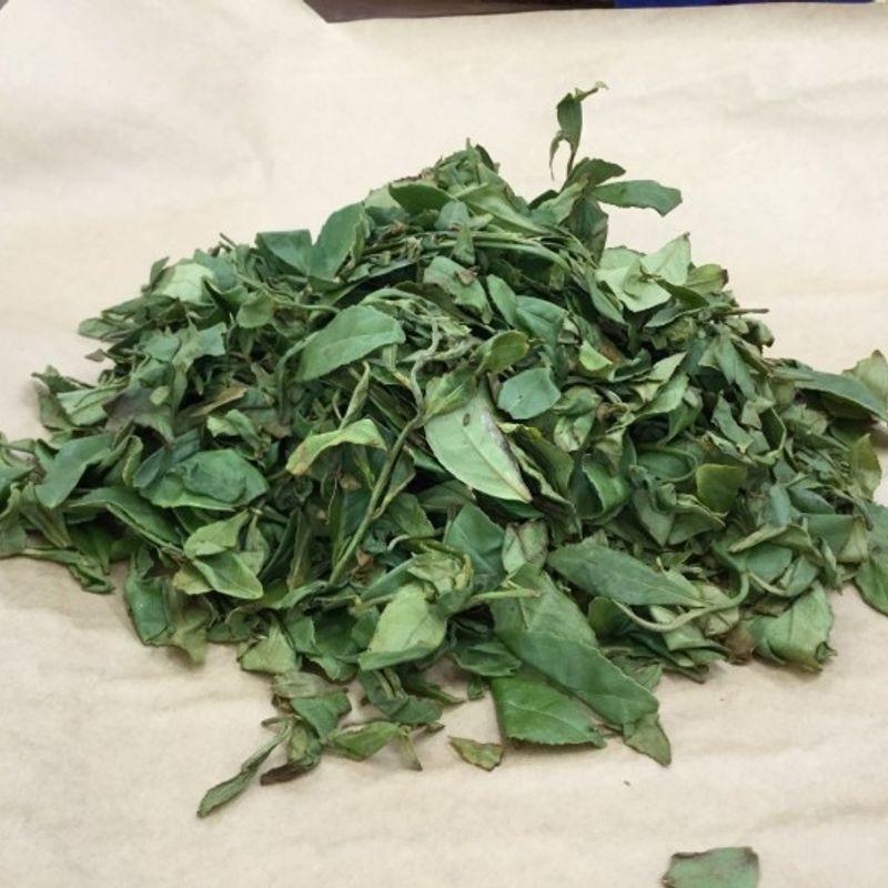 和光茶作り体験 photo