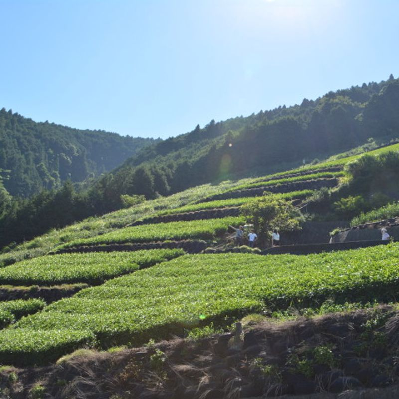 Exploring the Green Tea culture of Shizuoka with City Cost photo