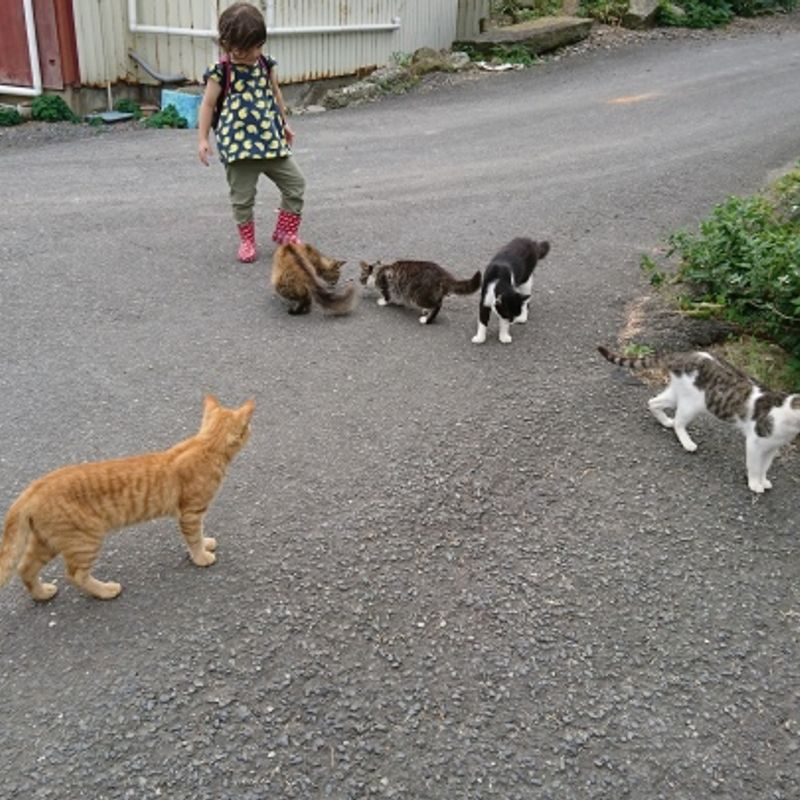 A Day Trip to Tashirojima Cat Island, Miyagi photo