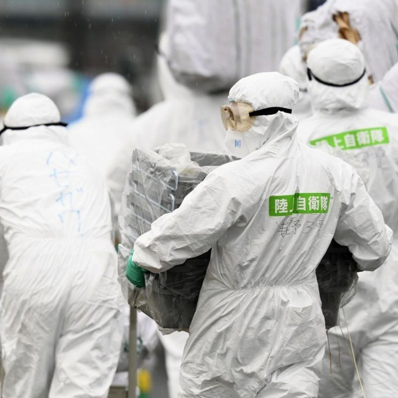 "Swine fever spreads in Japan, gov't warns of ""extremely serious"" phase photo"