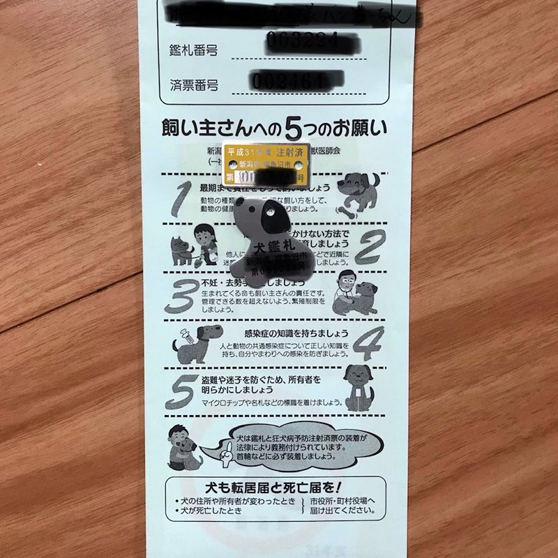 Rabies Vaccines & Heartworm Meds: Some Routine Medical Tips for Your Dog in Japan photo