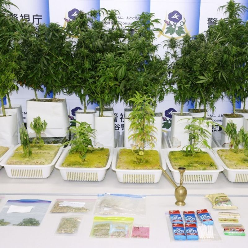 Marijuana tops paint thinner as most abused substance in Japan photo