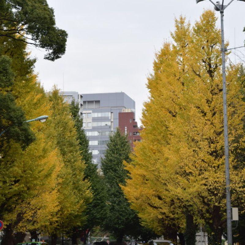 Autumn in Tokyo: Pure Beauty photo