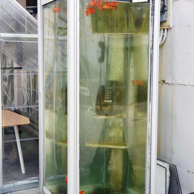 盗作告発後に削除される金魚充填の電話ボックス photo
