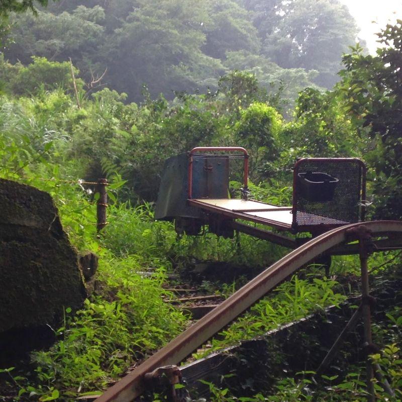 Shizuoka Prefecture - the tea paradise photo