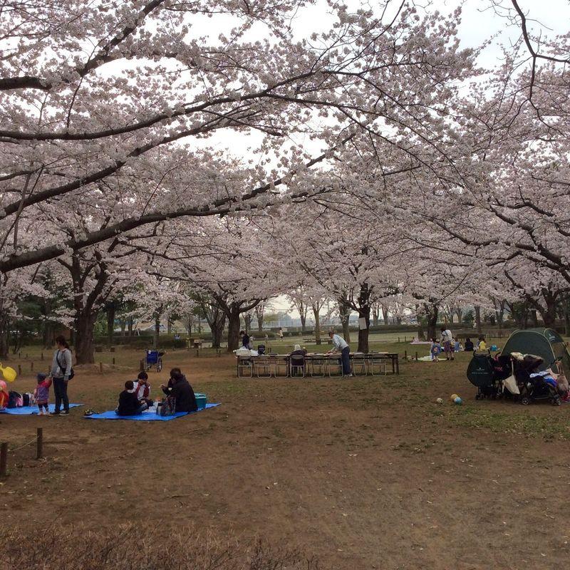 埼玉県の生活 - ライフスタイルを追求する photo