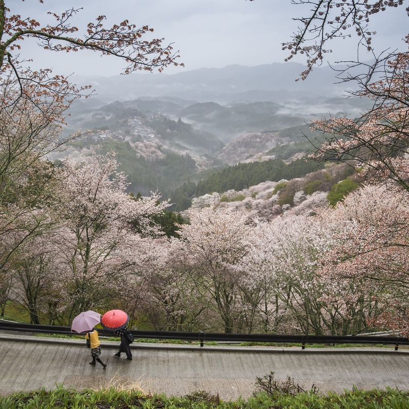 Ways to enjoy hanami / cherry blossom in Japan: The one with the ... photo