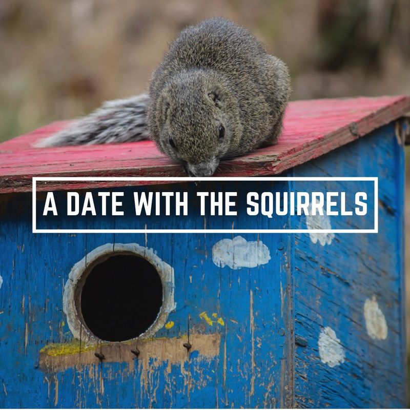 A date with the squirrels photo