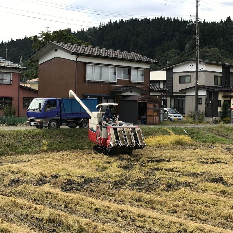 Harvest time! photo