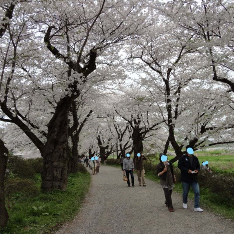 Three Awesome Sakura Spots in Tohoku photo