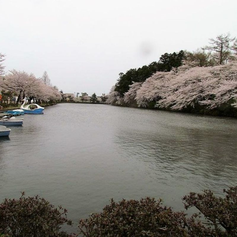 "Hanami in one of the best parks ""Takada Park"" in Niigata photo"