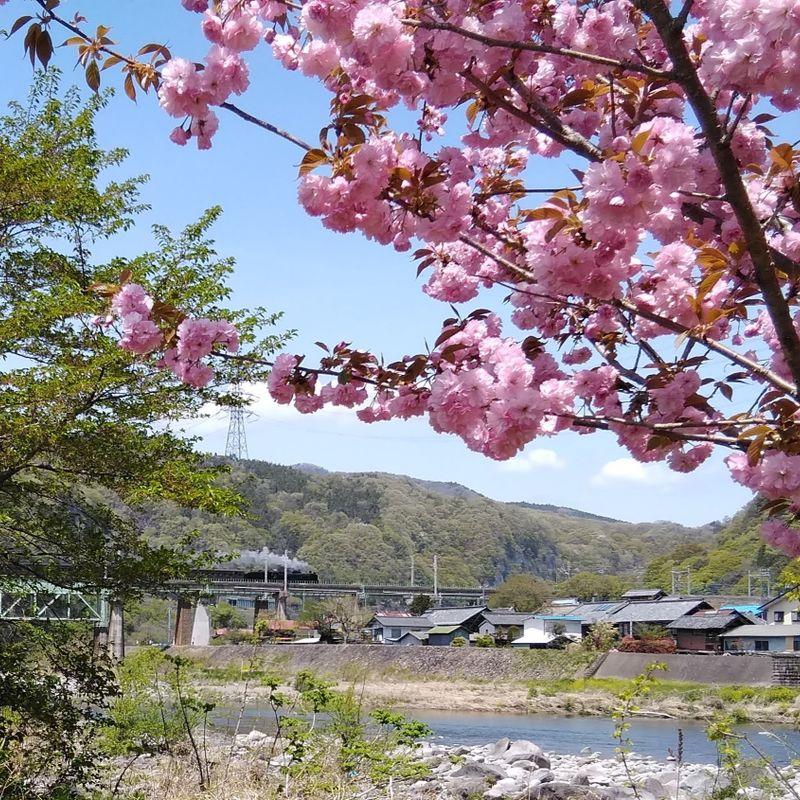 Spring in Japan: scenic camping photo