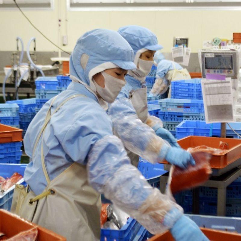 Japan gov't warns organizations against firing pregnant foreign trainees photo