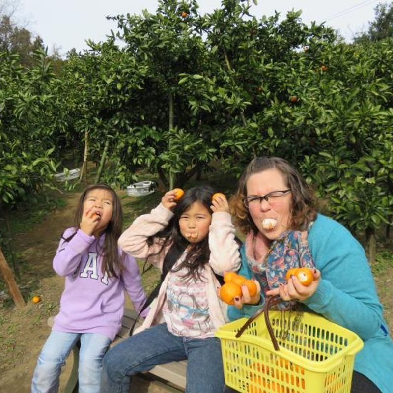 Hunting for oranges photo