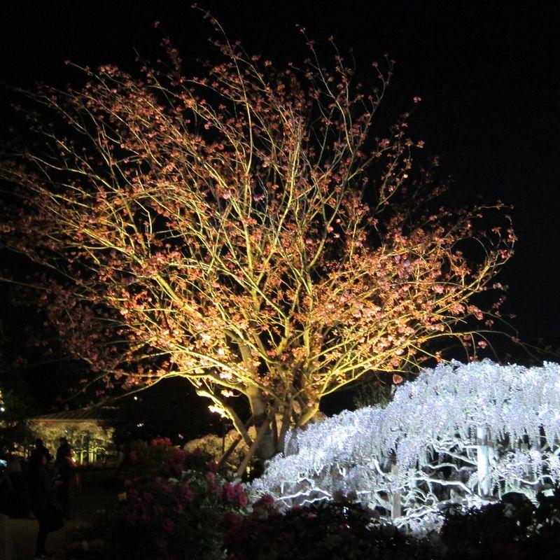 Ashikaga Flower Park light up photo