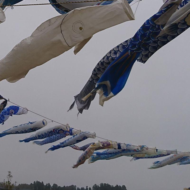 Yamoto's Amazing Carp Streamers photo