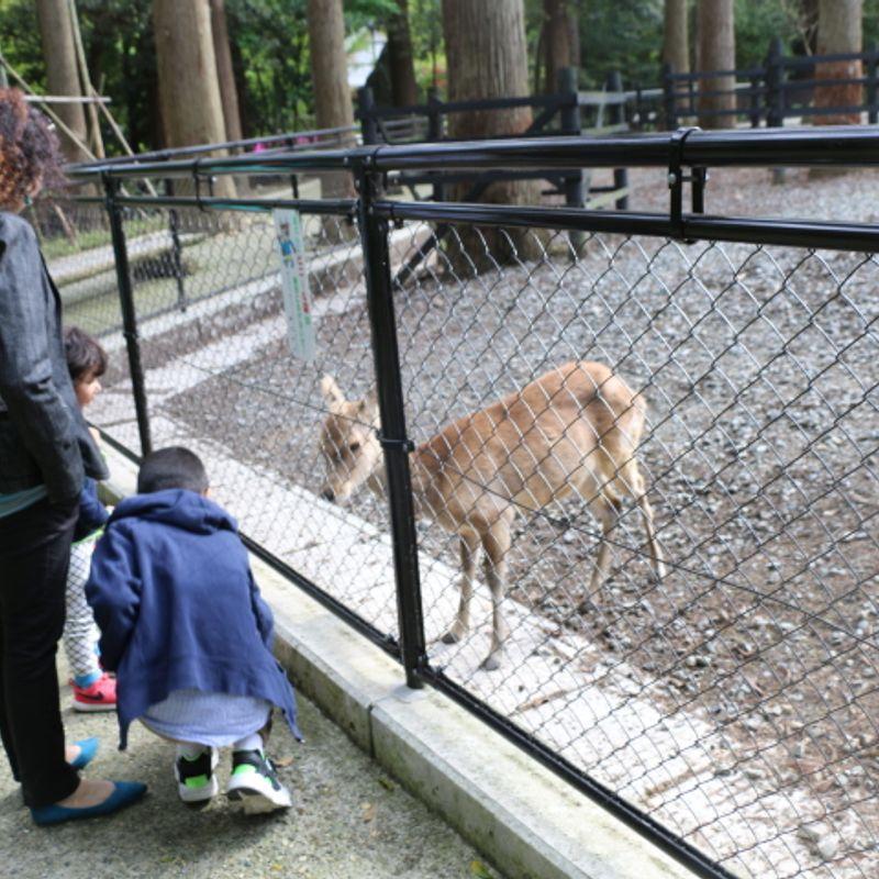 A Day Out to Yahiko Shrine photo