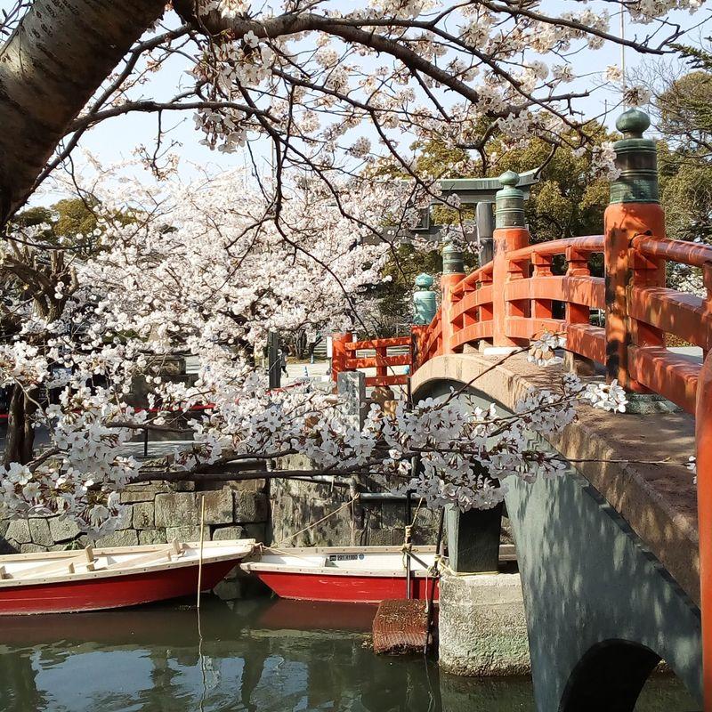 Yanagawa City's Sagemon Matsuri photo
