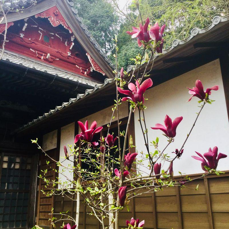 Magnificent Magnolias photo