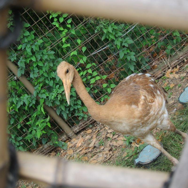 Tobu Zoo in Saitama photo