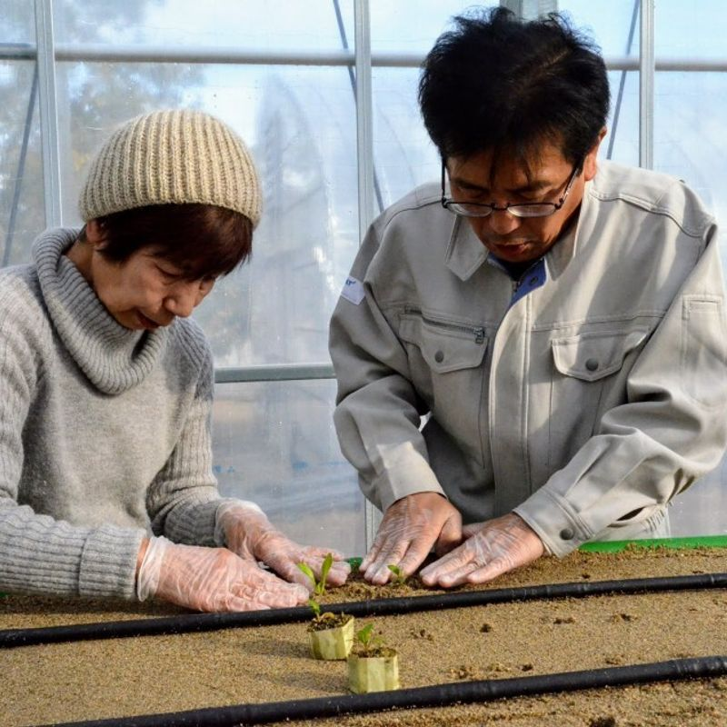 Online farm-sharing brings together Kyoto community photo