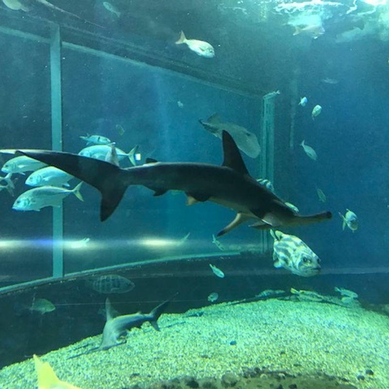 Why Niigata's MarinePia Aquarium is great for Families photo