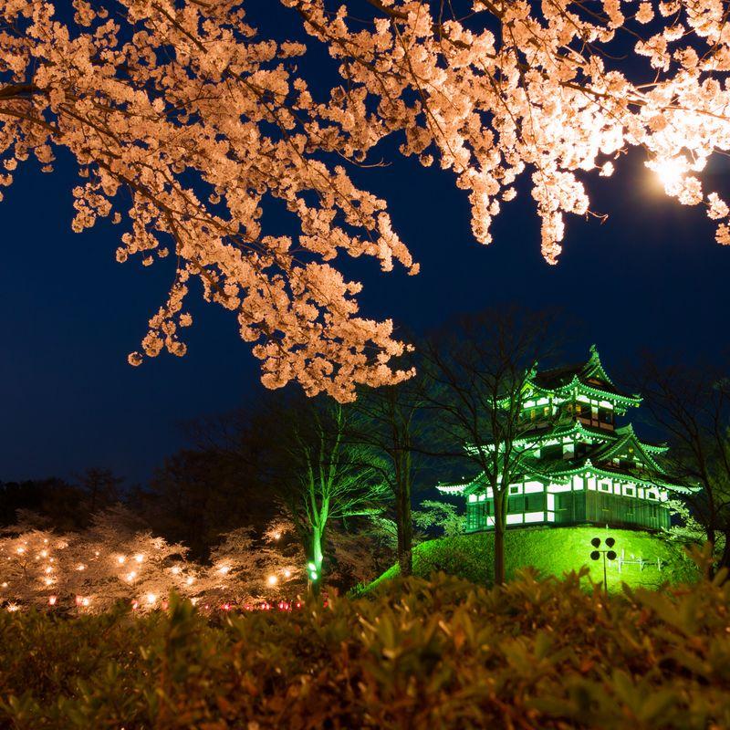 西のベスト - 新潟の3つの桜スポット photo