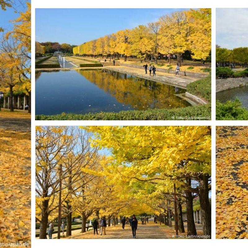 Impressions of Japan: Showa Kinen Koen Autumn 2017 photo