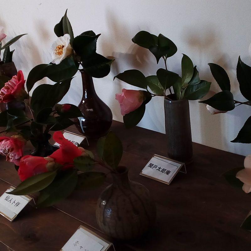 Kurume Tsubaki Fair photo