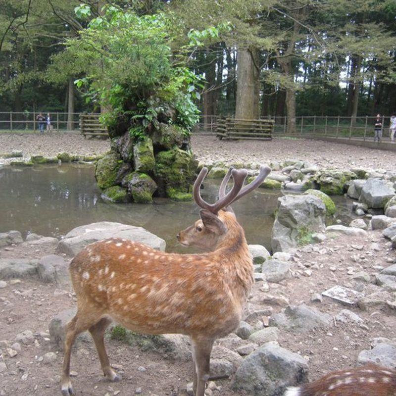 Enjoy Niigata for free! photo