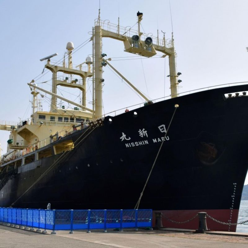 Japan whalers return from Antarctic, no protest activities reported photo