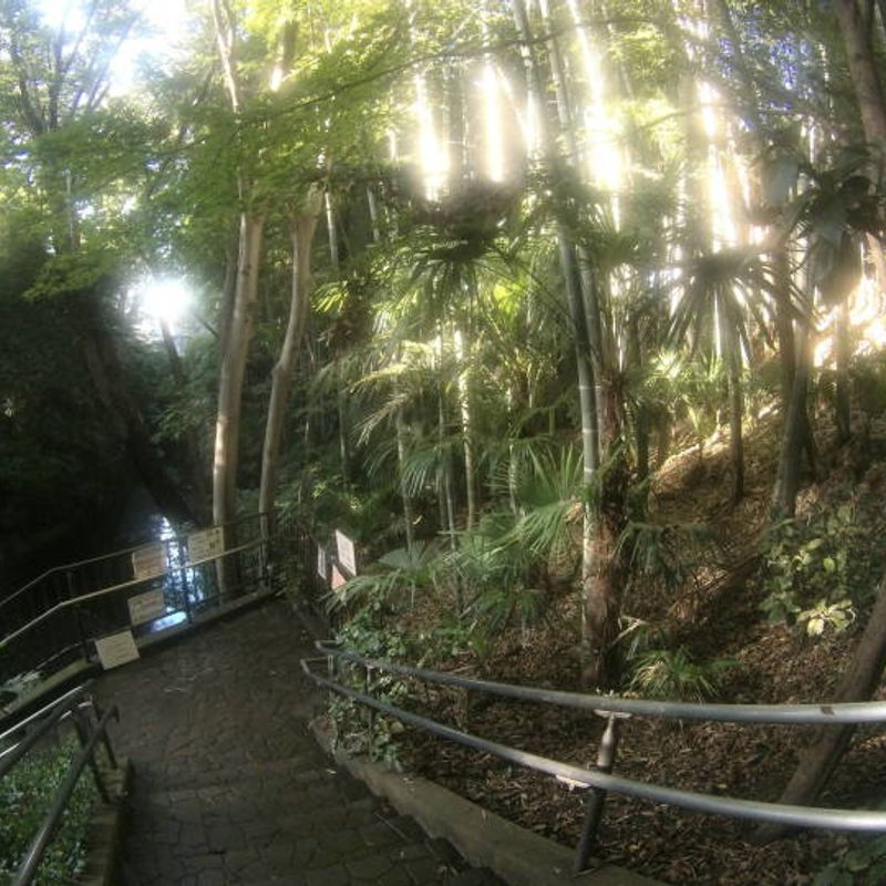 Todoroki Valley - An Escape from the Hustle and Bustle of Tokyo photo