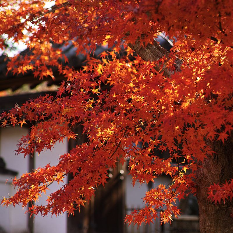 Enjoyment of Japan's autumn leaves comes in a variety of forms photo