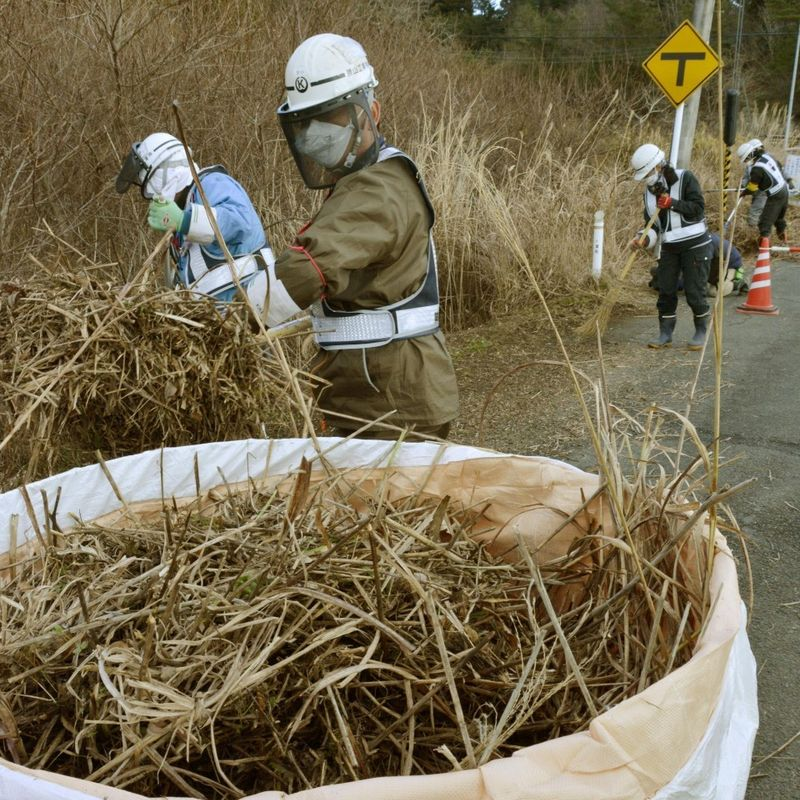 Radiation cleanup work begins in Fukushima nuclear plant town photo