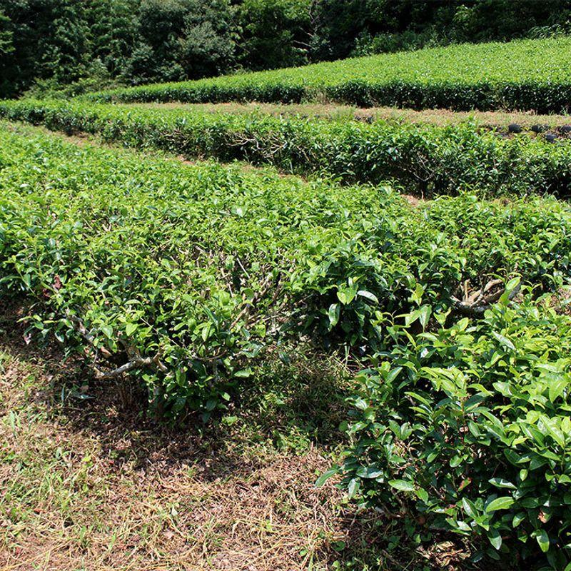 林夏子の「はてしないお茶物語」 Vol.3 有機栽培茶のリーディングカンパニー 葉っピイ向島園 photo