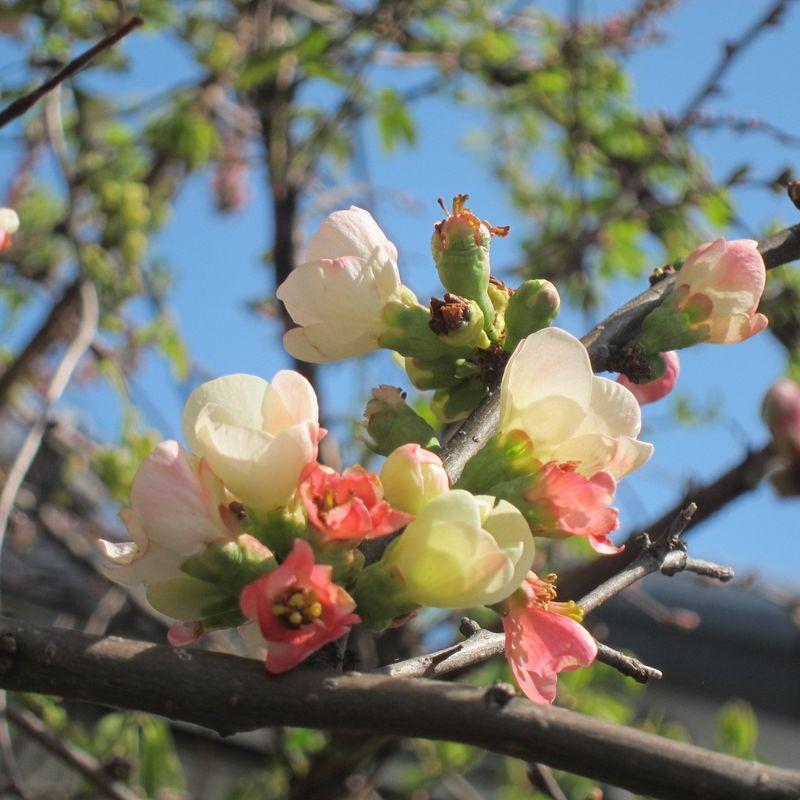 Peach and magnolia season photo