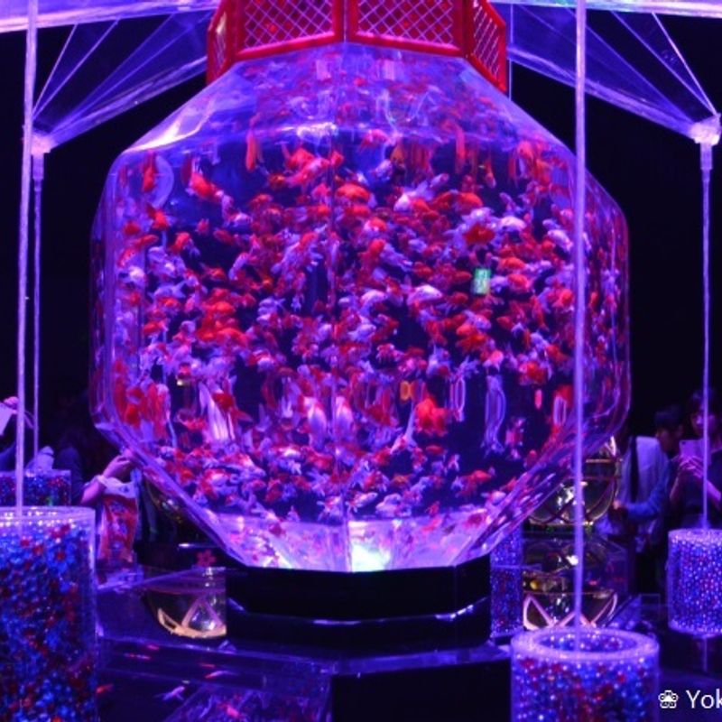 Impressions of Japan: Art Aquarium 2017 photo