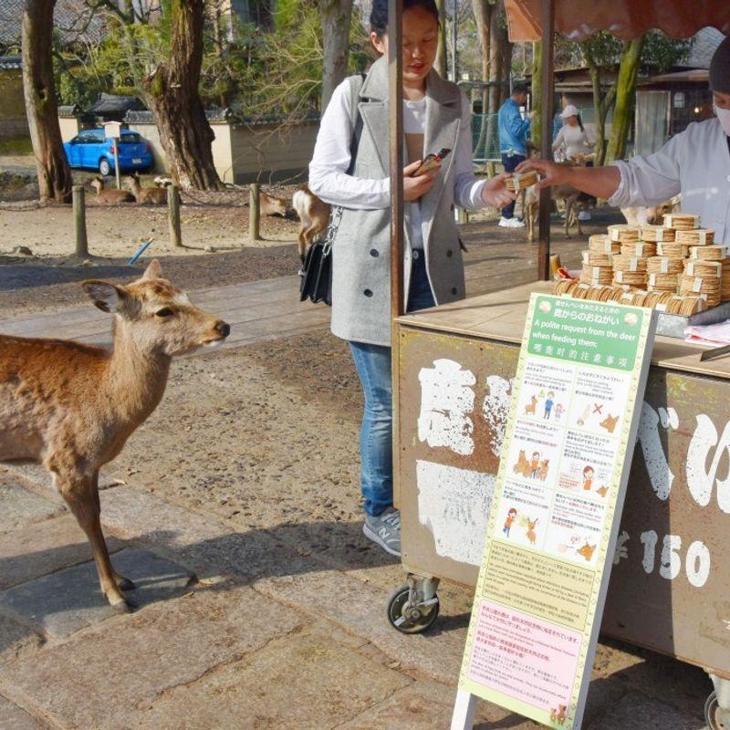 鹿は観光客に日本の公園が摂食のヒントを発行するように促す photo