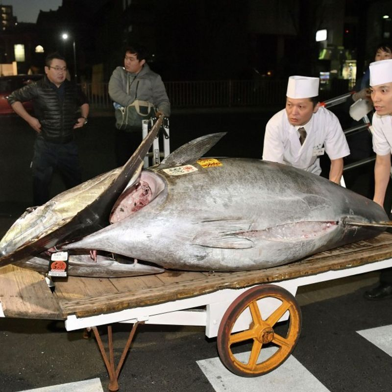 Tuna fetches record .1 mil. at new market's New Year auction photo