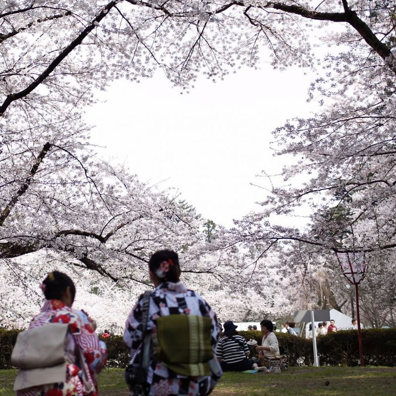 Cherry blossoms forming heart shape drawing tourists to Japan park photo