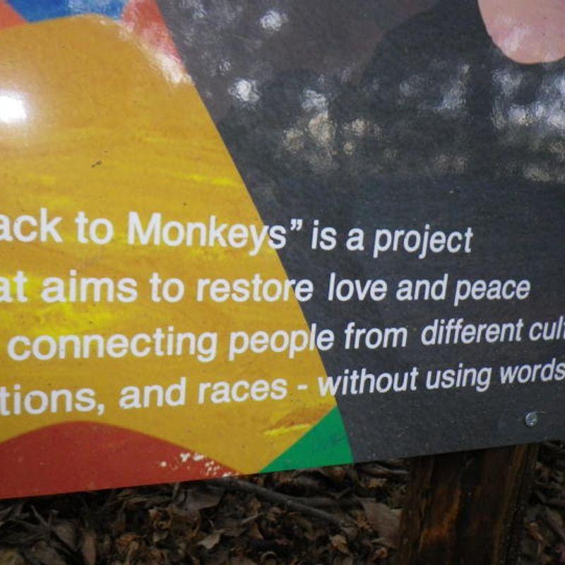 Monkeys in Kyoto?! photo