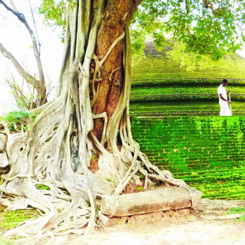 Building Bonds:  Sri Lanka in Japan, And Vice Versa! photo