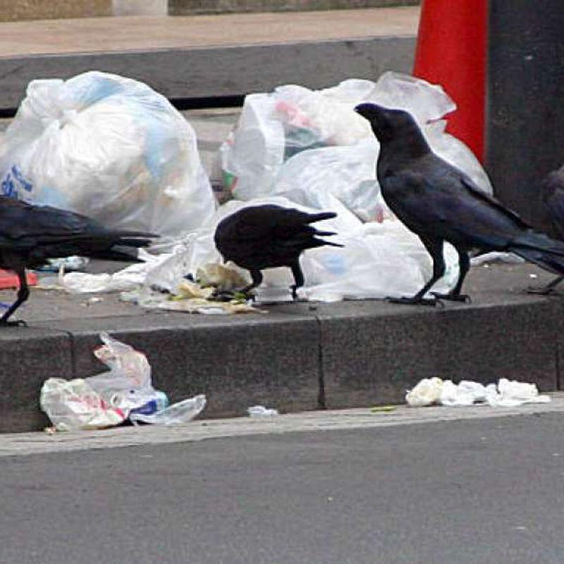 Crows Suck! photo