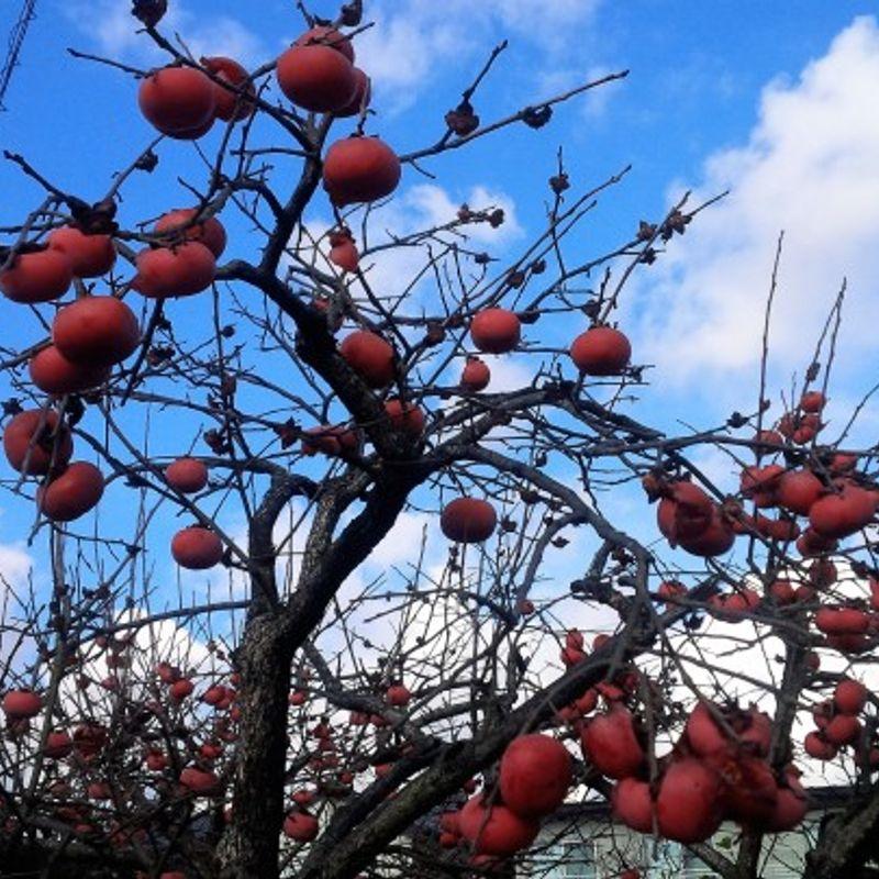 A Wonderland of Fruits photo